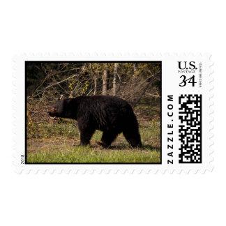 CBB Chubby Black Bear Postage