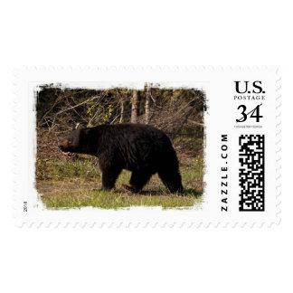 CBB Chubby Black Bear Postage Stamps