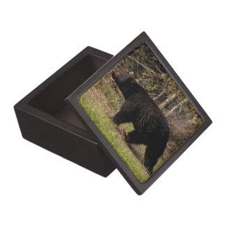 CBB Chubby Black Bear Premium Trinket Boxes