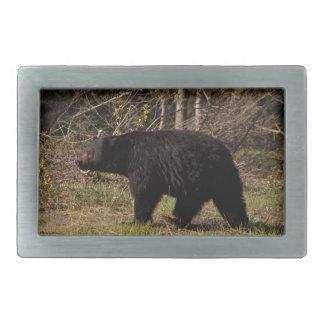 CBB Chubby Black Bear Rectangular Belt Buckle