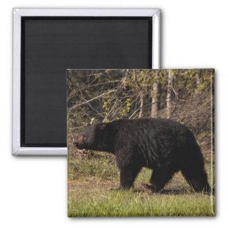 CBB Chubby Black Bear Refrigerator Magnets