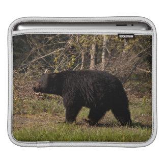 CBB Chubby Black Bear Sleeve For iPads