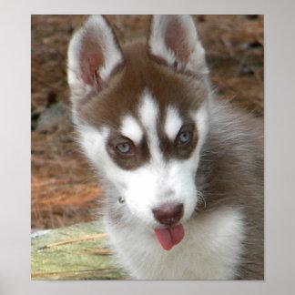 CC poster del perrito del husky siberiano