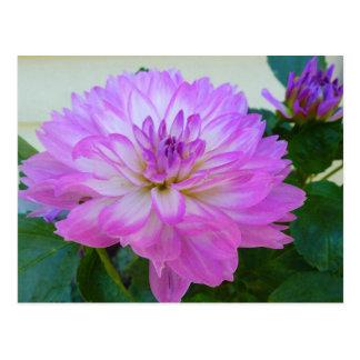 CD- Lavender Dahlia Floral Art Postcard