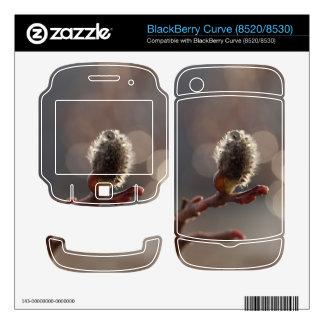 CDR Catkin Dream Skin For BlackBerry