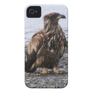 Cebada de Kenai Alaska Eagle de oro Iphone 4 allí iPhone 4 Cárcasa
