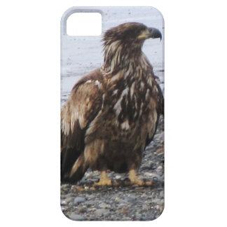 Cebada de Kenai Alaska Eagle de oro Iphone 5 allí Funda Para iPhone 5 Barely There