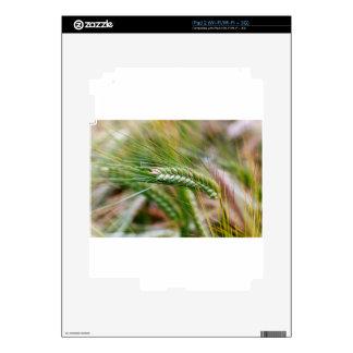 Cebada verde iPad 2 calcomanías