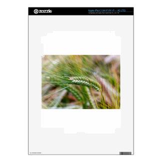 Cebada verde pegatina skin para iPad 3