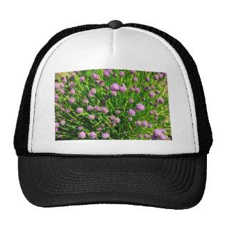 Cebolla de la ensalada que florece con los flores gorro de camionero