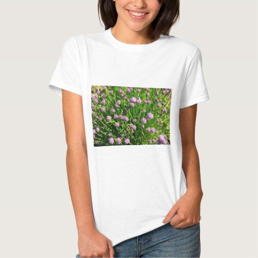 Cebolla de la ensalada que florece con los flores playeras