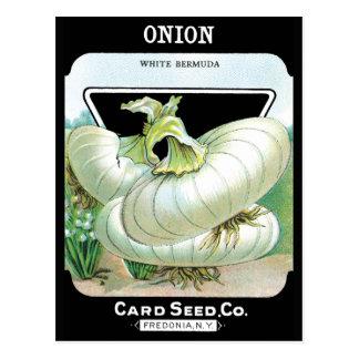 Cebollas blancas tarjeta postal