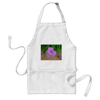 Cebolletas con los flores púrpuras de la flor delantal