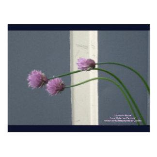 Cebolletas en la floración postales