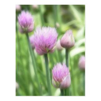 Cebolletas florecientes tarjetas postales