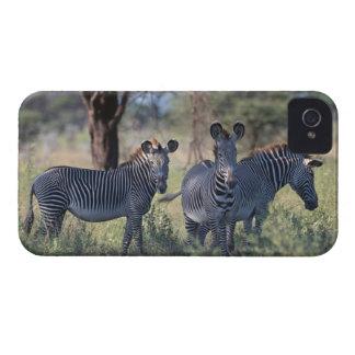 Cebra 2 iPhone 4 Case-Mate fundas