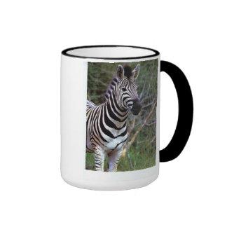 Cebra adorable en la taza