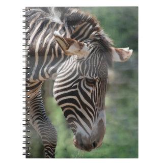 Cebra adorable note book