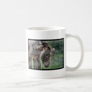 Cebra adorable tazas