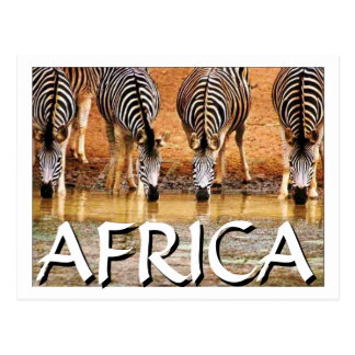 CEBRA AFRICANA - (Mojisola Onifade) Postales