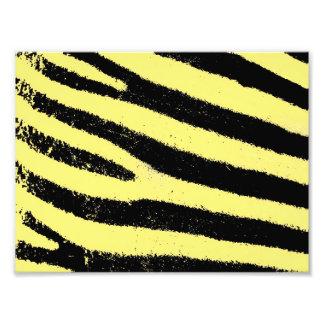 Cebra amarilla fotografía