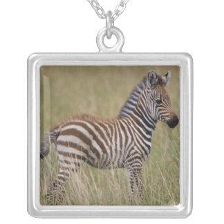 Cebra común del bebé, burchelli del Equus Pendientes Personalizados