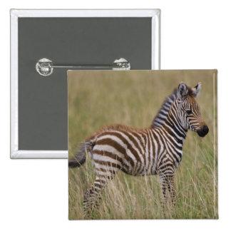 Cebra común del bebé, burchelli del Equus Pin