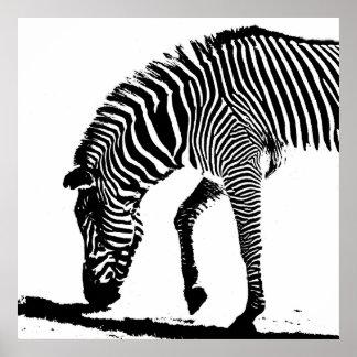 Cebra con la sombra impresiones
