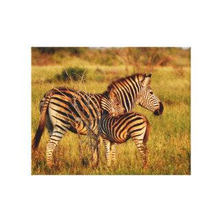 Cebra de África de los animales Impresión De Lienzo