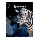 Cebra de Botswana Postales