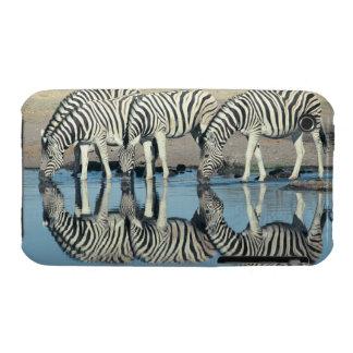 Cebra de Burchells (burchelli del Equus) iPhone 3 Cobertura