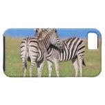 Cebra de dos llanos (quagga del Equus) en costero iPhone 5 Carcasa