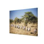 Cebra de la migración, Tanzania Impresiones En Lona