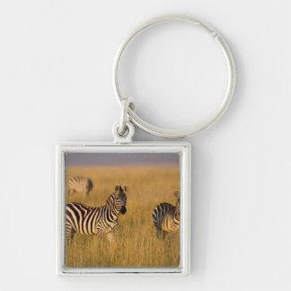 Cebra de los llanos (quagga del Equus) en la hierb Llavero
