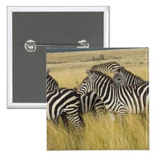 Cebra de los llanos (quagga del Equus) en la hierb Pin