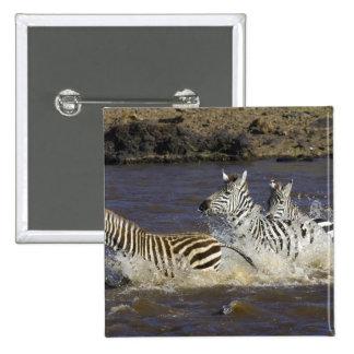 Cebra de los llanos (quagga del Equus) que corre e Pin