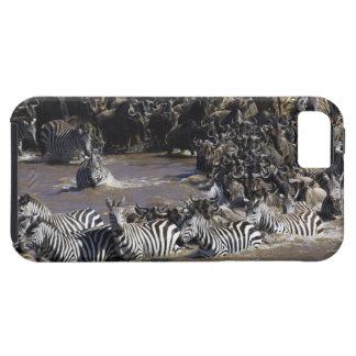 Cebra de los llanos (quagga del Equus) y Wildebees iPhone 5 Case-Mate Cárcasa