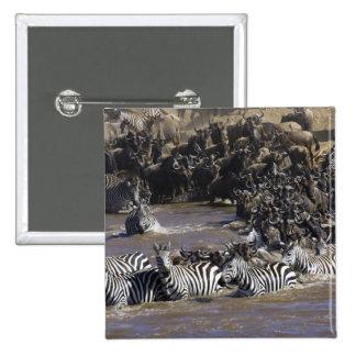 Cebra de los llanos (quagga del Equus) y Wildebees Pins