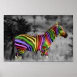 Cebra del arco iris póster