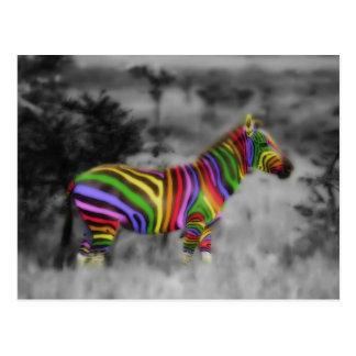 Cebra del arco iris postal