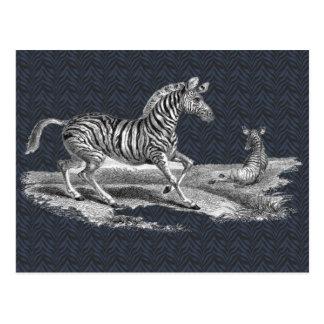 Cebra del arte del vintage y postal de la fauna de