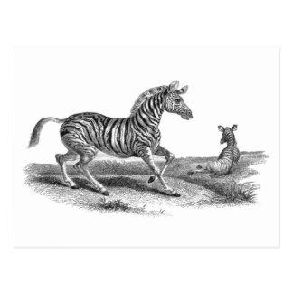 Cebra del arte del vintage y postal del animal del