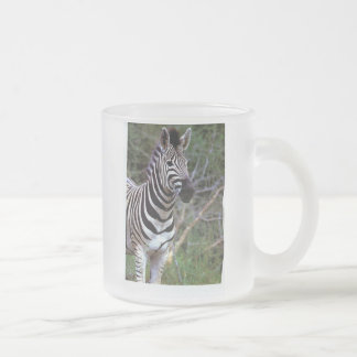 Cebra impresionante en la taza