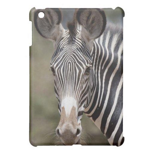 Cebra, Kenia, África