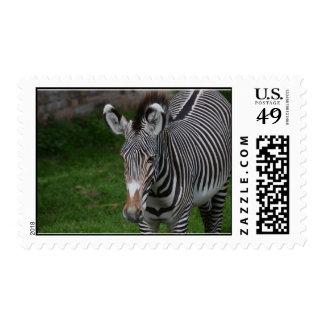 Cebra linda sello