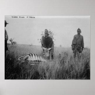 Cebra matada por los naturales en la fotografía de póster