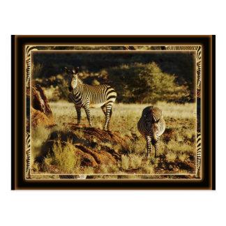 Cebra, postales del safari de la fauna de Birchell