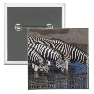 Cebra (quagga del equus) que bebe en un waterhole  pin