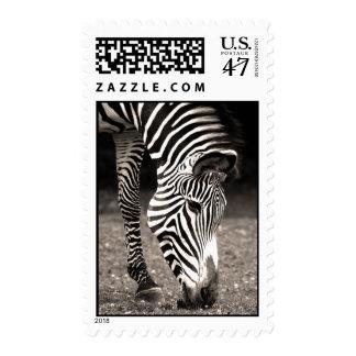Cebra que come la hierba timbres postales