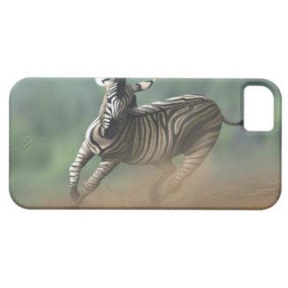 Cebra que galopa sobre el paisaje del desierto iPhone 5 Case-Mate protector